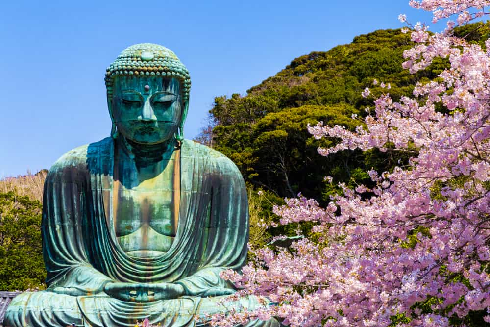 The Great Buddha, Kamakura. Cherry Blossoms in Japan