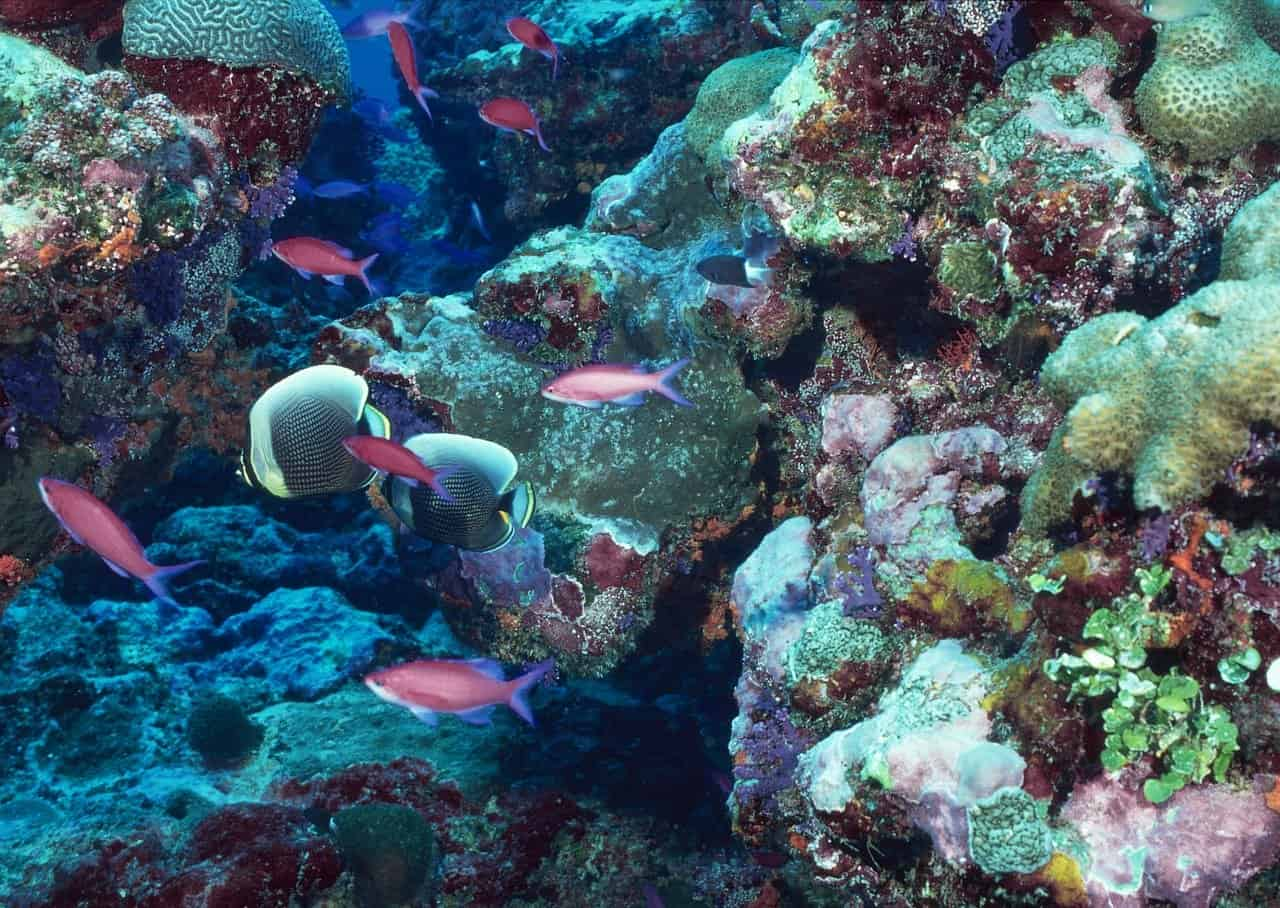 coral reef sustainability
